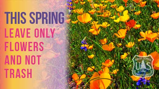 This Spring: Leave only Flowers and not Trash.