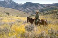 Forest Service Rangelands Manager.