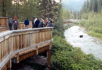 Photograph of Fish Creek wildlife viewing platform with people leaning on the railing watching a bear in the stream below.