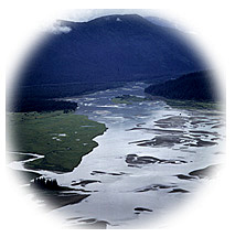 vignette of the braided streams of the Stikine Delta