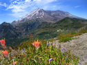Mount St Helens Area