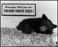 [Photo] Smokey Bear as a cub, sleeping under a sign that says 'Remember-Only you can prevent forest fires!'