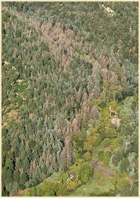 [Image]: Aerial view of defoliation on east side of Sandia Mtns