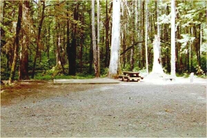 Picture of Panther Creek Campground