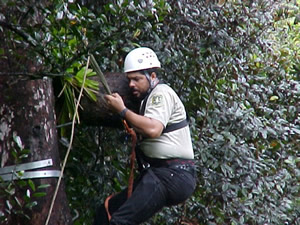 Photo of technician improving a natural tree cavity