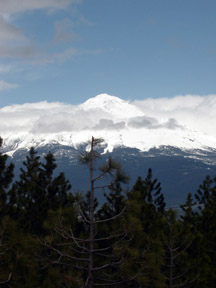 Snow-capped mountains against a blue sky with tree tops in the foreground.
