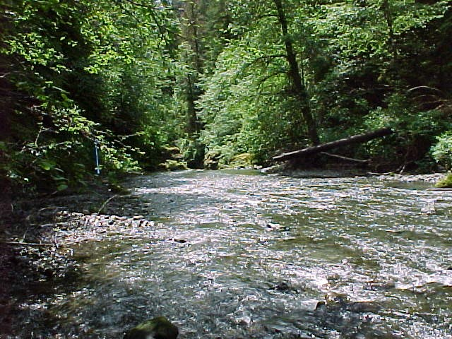 The West Fork Humptulips River is one of the few rivers on the Peninsula.