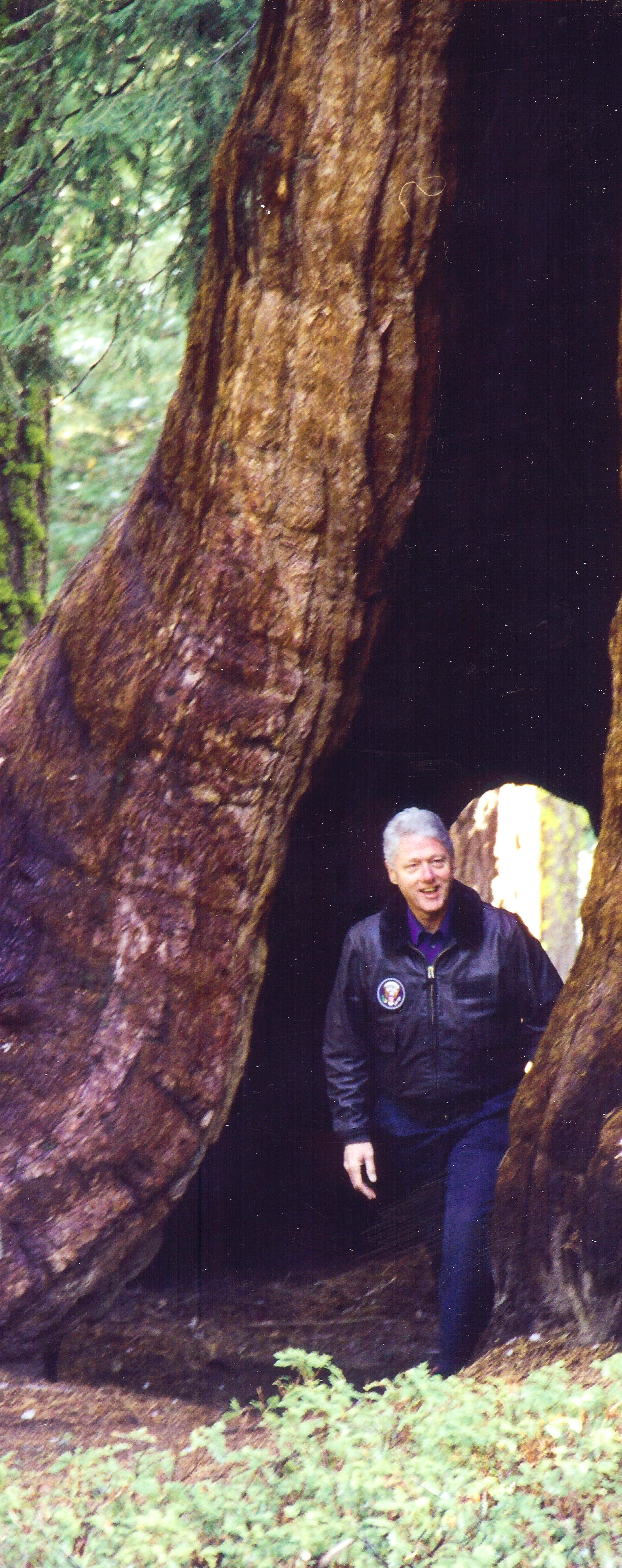 President Clinton visits the giant sequoia where he signed the Proclamation