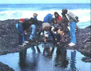 photo of group of people looking at a tidepool at Cape Perpetua
