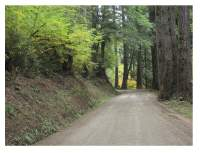 photo of well designed forest road