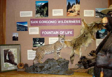 Photo: wildlife display at Mill Creek Ranger Station
