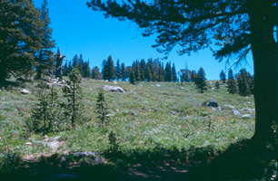 From the shade of a pine, an example of Mokelumne Wilderness' diverse landscape includes conifer stands and a large clearing full of wildflowers and granite boulders.  Photography by Amy L. Reid.