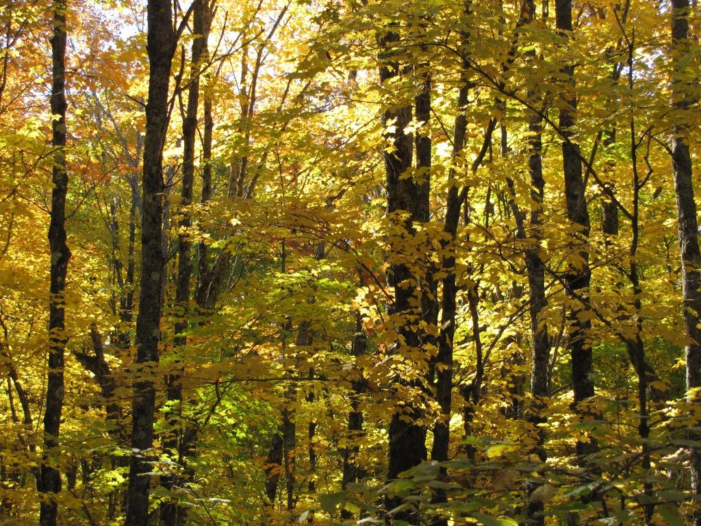 A view into the fall forest on October 8th.