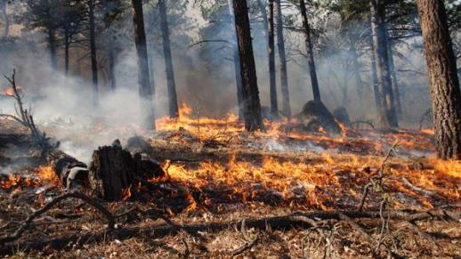 Prescribed fire on the Descanso District