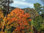 Fall colors can be seen throughout West Fork, normally during the last weeks of October.