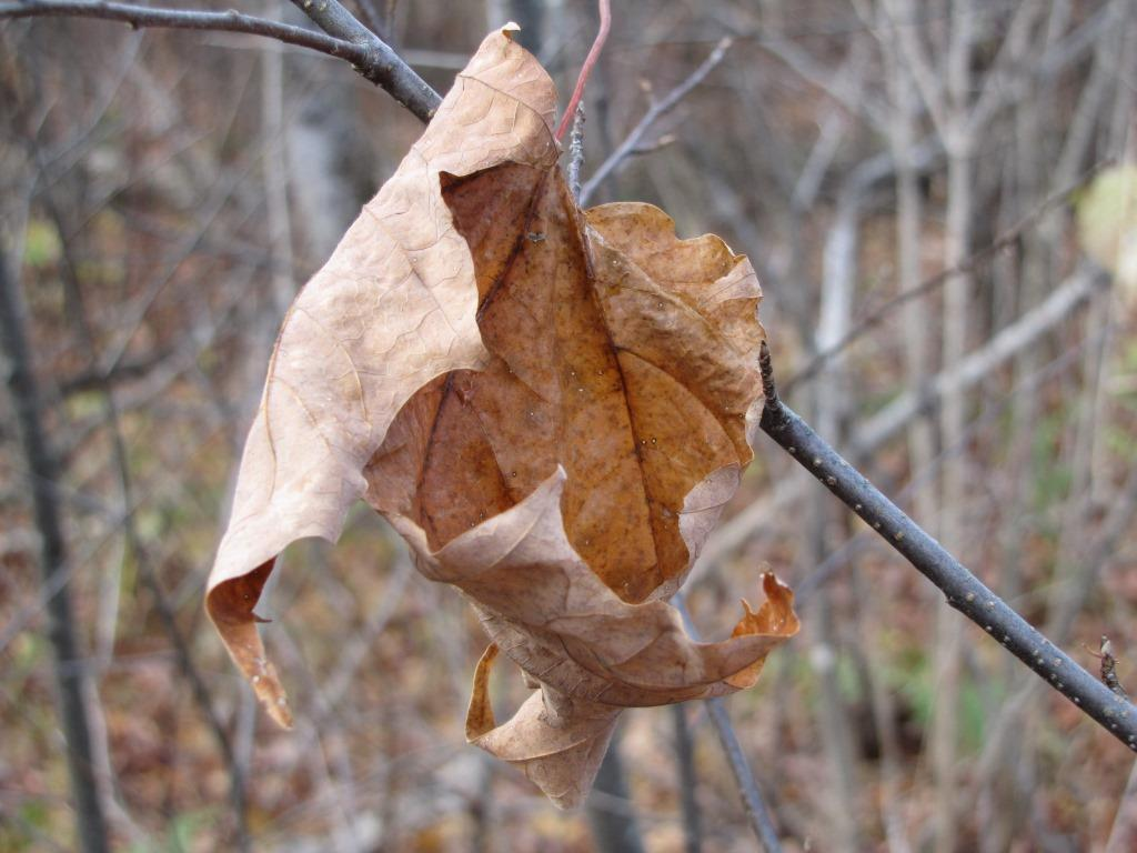 A fallen leaf caught on a branch.