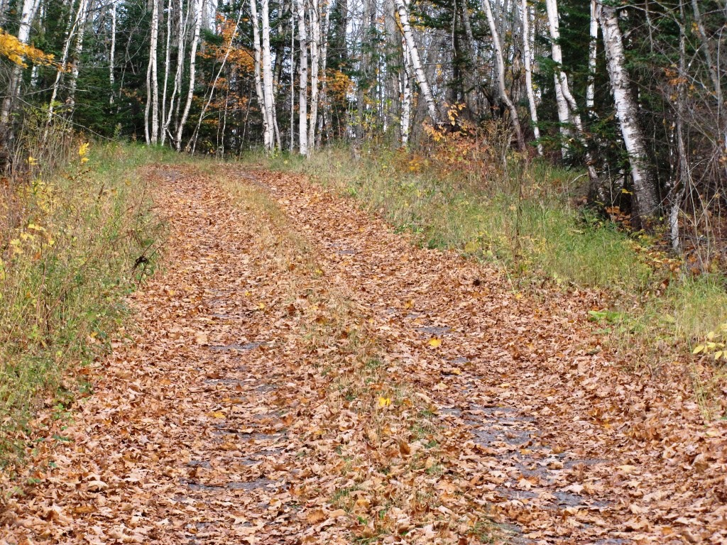 A little used road covered in fall leaves.