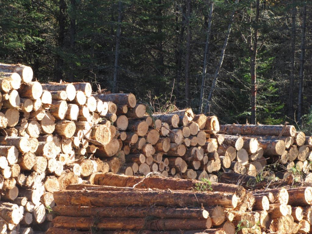 A pile of logs near a logging operation.