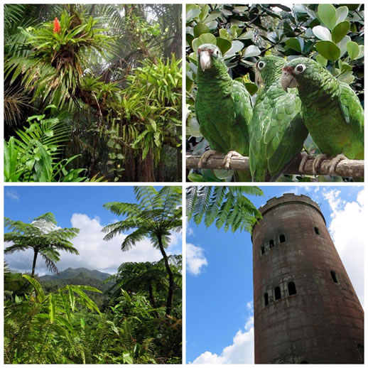 Four images from around the forest: tropical flower, parrots, tropical trees, brick tower