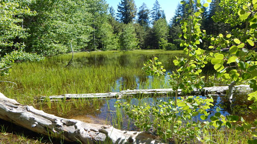 Big Meadow Campground Pond