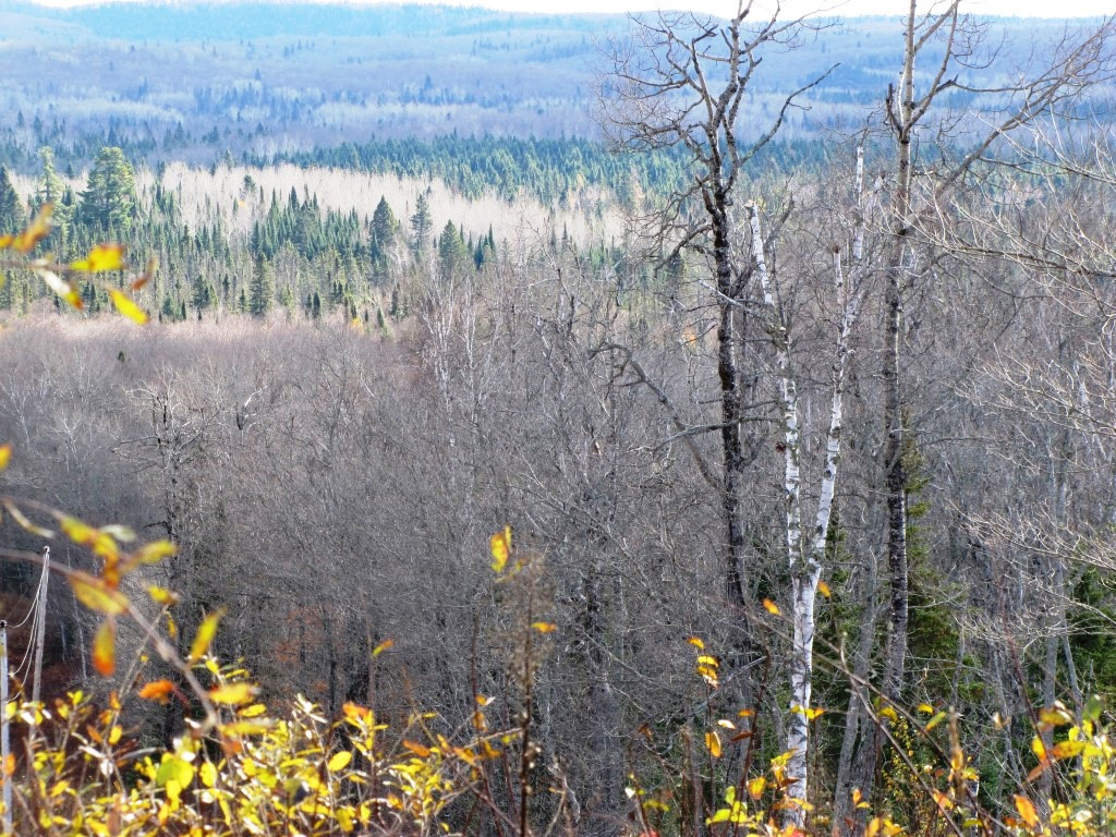 Looking out over a forest nearly devoid of trees.