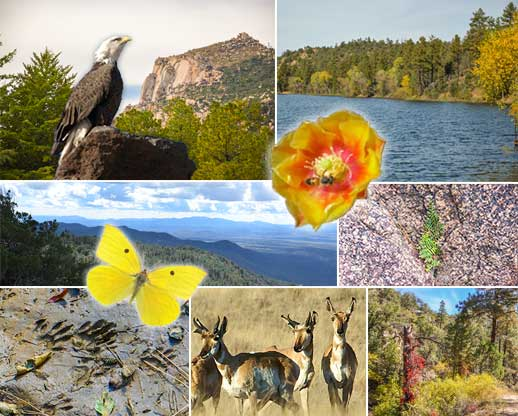 Collage of scenery, plants and wildlife found on the Prescott National Forest