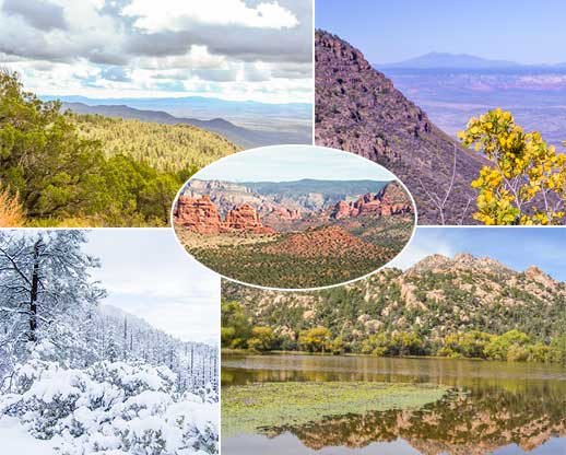 Collage of scenery on the forest including panoramic vistas and landscapes during different season