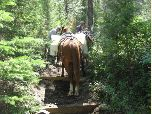 Backcountry Horsemen Work on a Turnpike in the Lewis and Clark National Forest