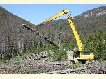 Equipment removes hazard trees killed by mountain pine beetle from a road corridor.
