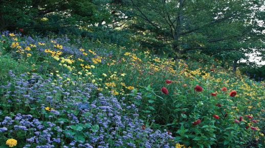 Field of flowers and forbs in a forest