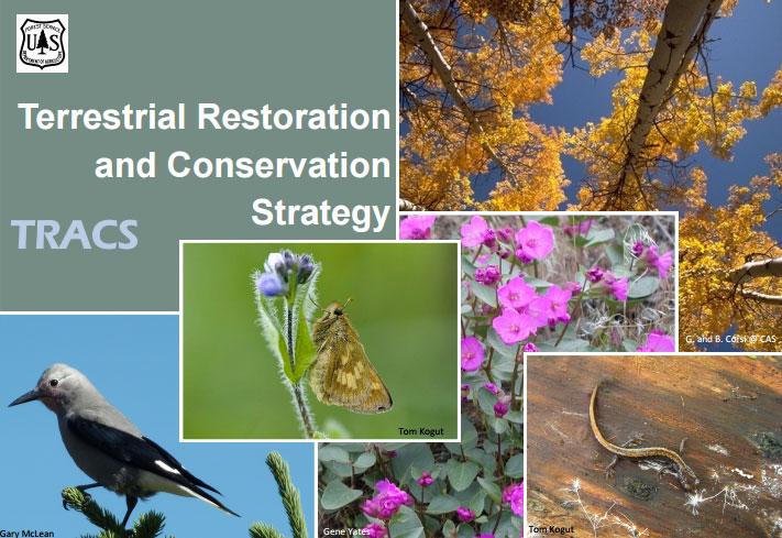 Region 6 wildlife wildlife sciox Gallery