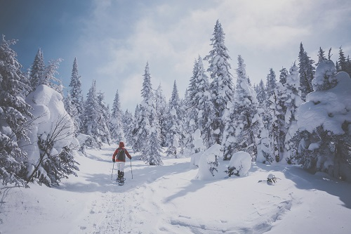 Woman on snowshoes heads into the forest