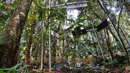 One of the TRACE forest warming plots in the Luquillo Experimental Forest, Puerto Rico.