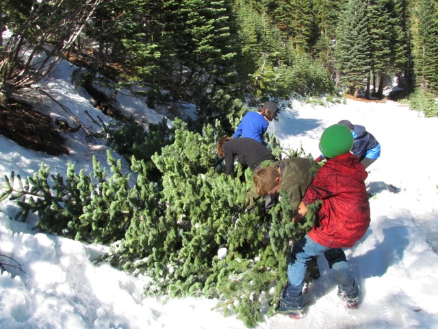 Young Boy Scouts dragging Christmas trees through the snow
