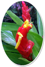 Bromeliad - red and yellow tropical flower