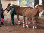 Forest Service employees stand by mules adorned with red, holiday bridles as children admire them.