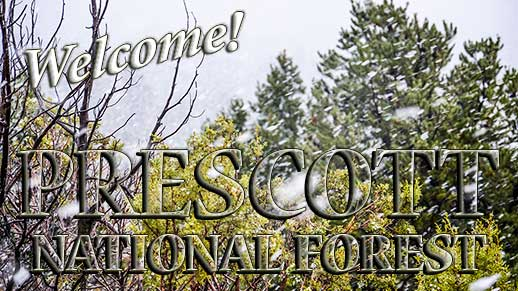 Welcome to Prescott National Forest.