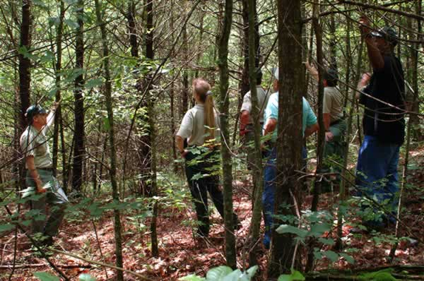 Forest Service and public working in the forests