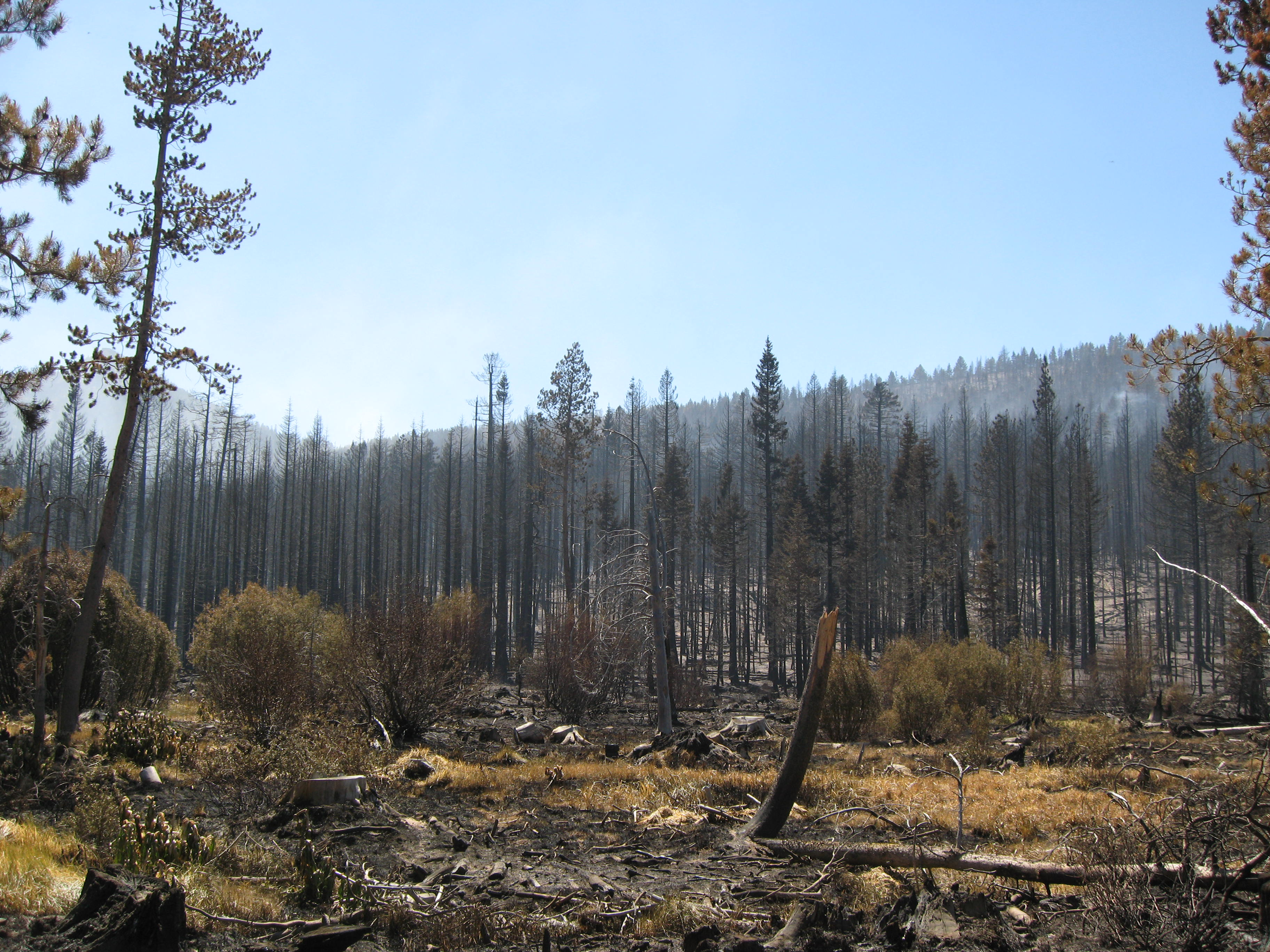 Stand of trees burned in the Angora Fire