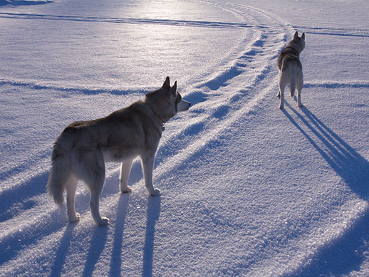 Two dogs stand looking into the distance on a snow-covered lake.