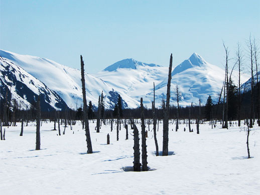 A tree-studded plain, covered with snow extends out to a mountain range.