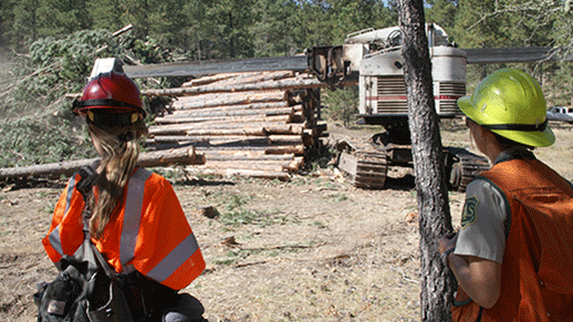 two women, USFS employees, monitor thinning project