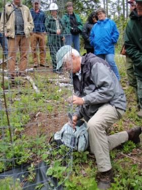 Photo of forester showing field trip use of exclosure to protect seedlings