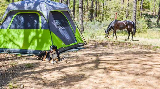 Camping  Horse and dog relaxing outside a tent in Groom Creek Horse Camp