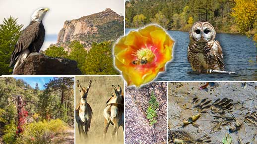 Collage of plants, animals, and geologic features on the forest