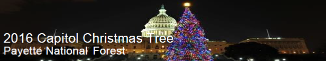 Capitol Christmas Tree Header