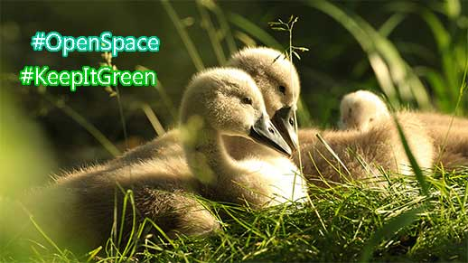 Conserve open space, keep it green