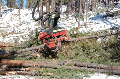 machine cutting trees