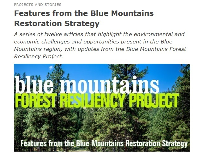 Blog for Forest Resiliency Project