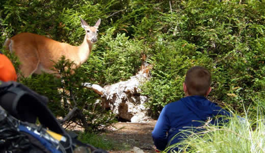 Deer and boy looking at each other